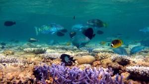 C: Australian Institute of Marine Science