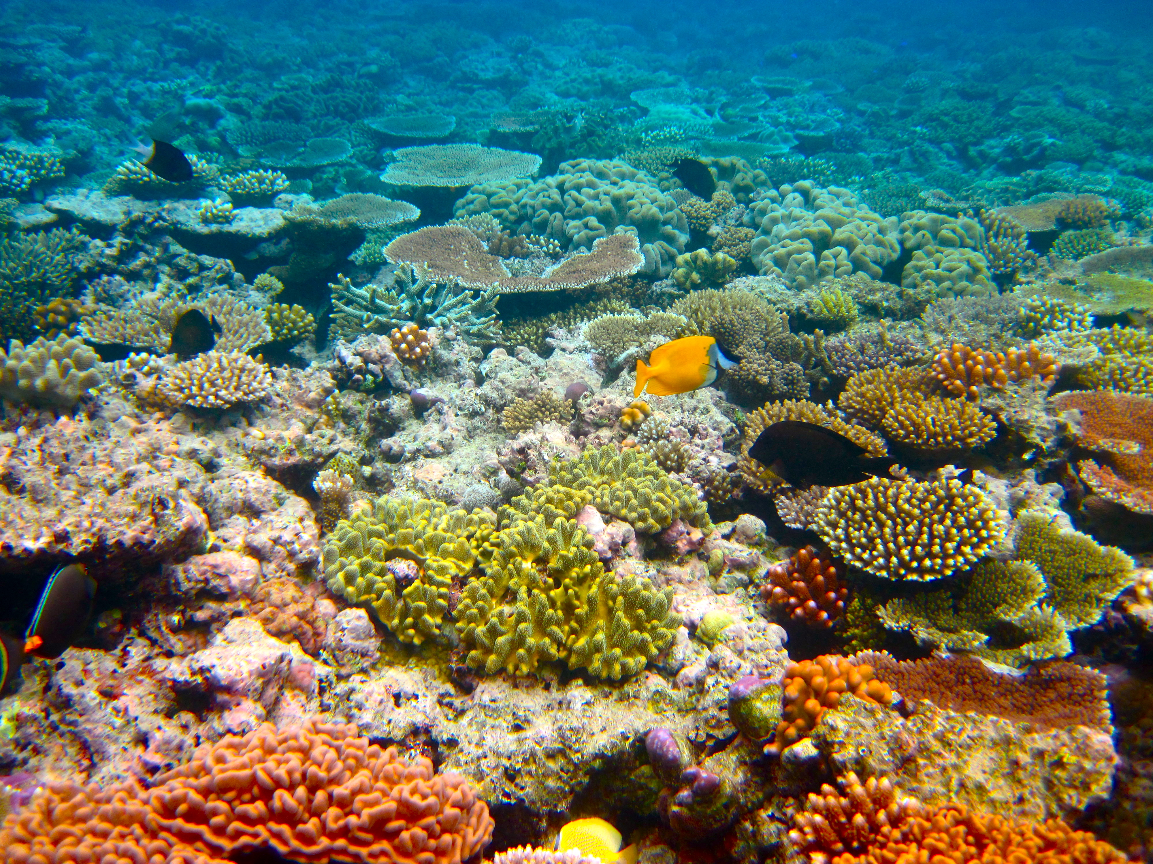 """Great Barrier Reef """"Is Dying Under Our Watch"""" - Oil Change InternationalOil Change International"""