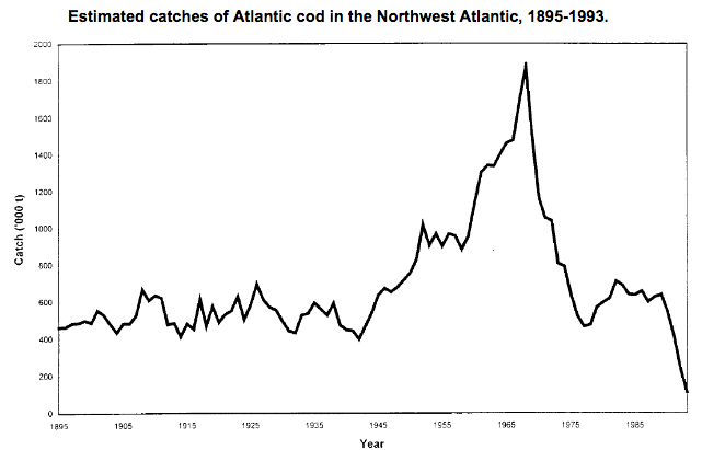 cod-catch